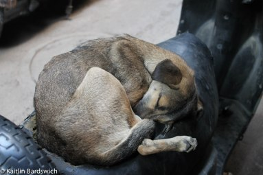 Love Affair with the Animals of India