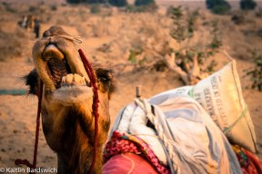 Oh Simon, my camel. Your attitude is awesome