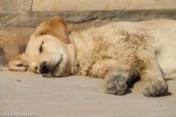 I can't even. Soooooo cute!!