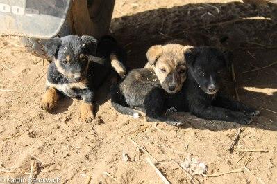 Puppies!!