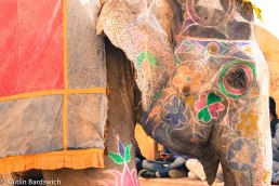 Gorgeous elephant. Though sad that they are still being used as entertainment and for tourists to ride.